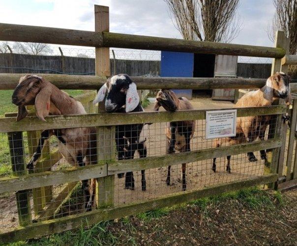 مزرعة وودسايد للحيوانات