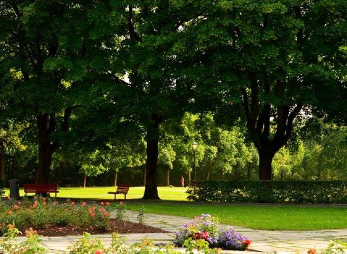 شجر حديقة فيجلاند