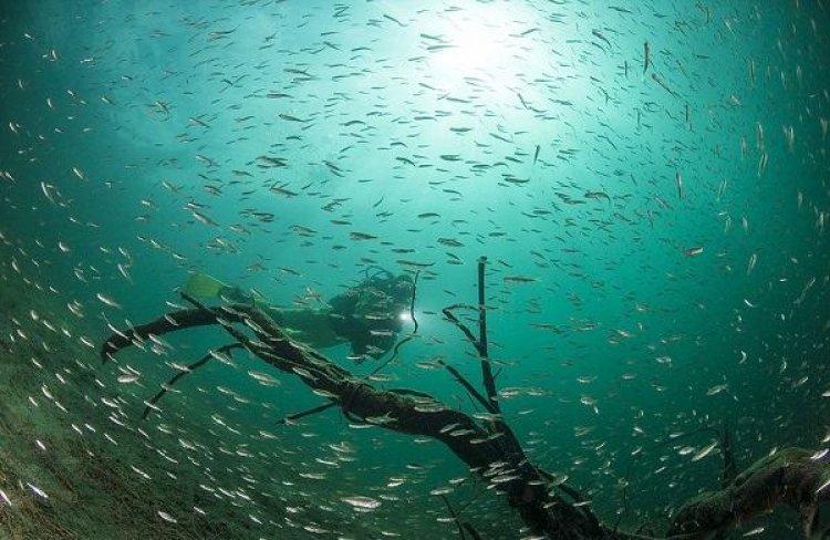 الغوص تحت البحيرة