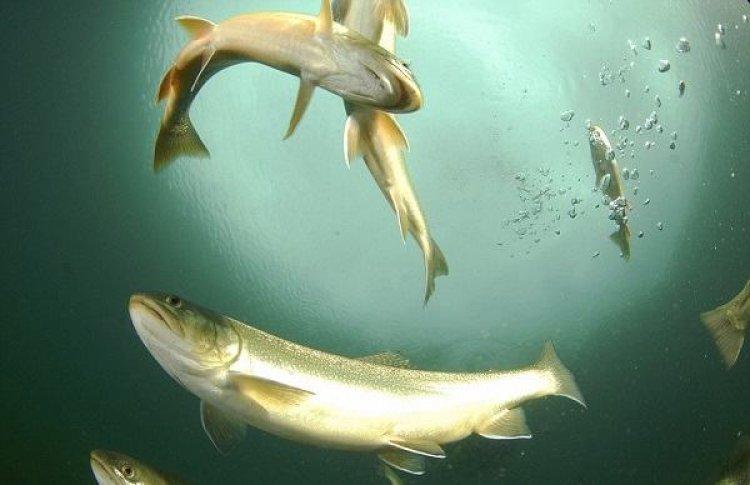 أسماك نادرة
