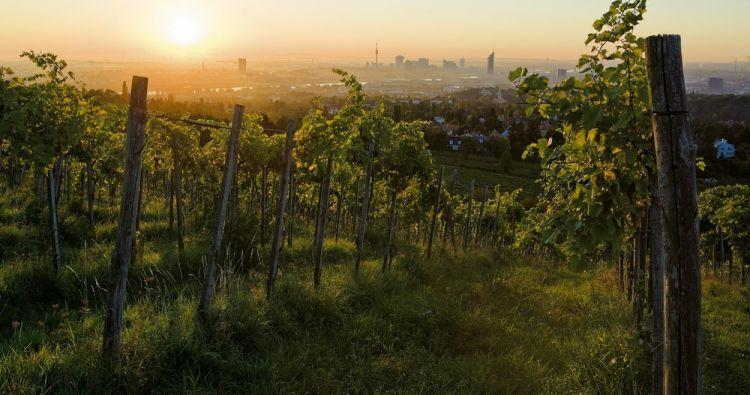 غابات فيينا