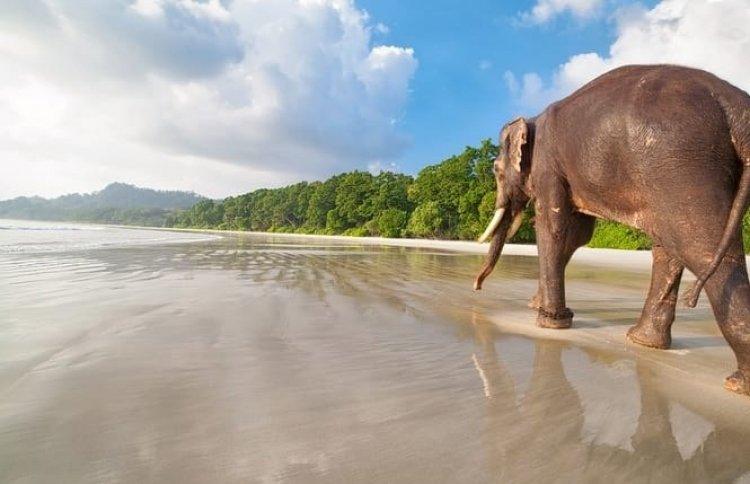 شاطىء الفيل