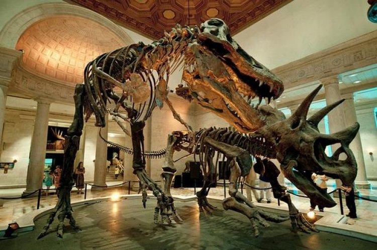 متحف التاريخ الطبيعي في لوس أنجلوس