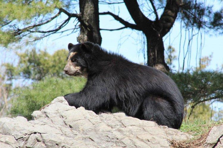حيوان في حديقة حيوان كوينز
