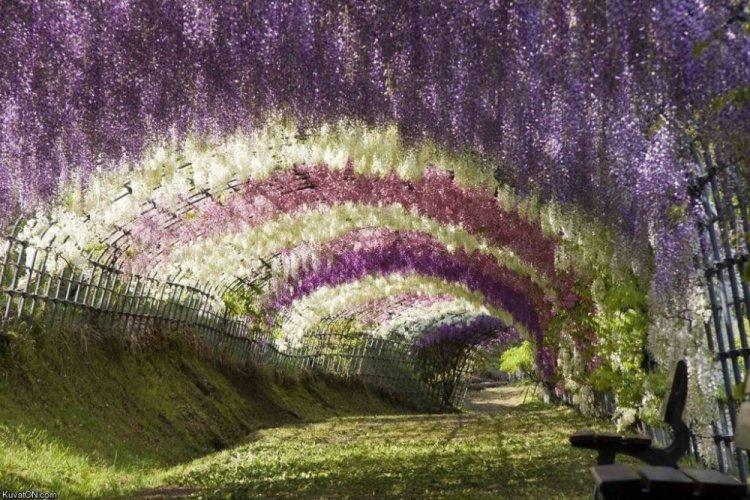 حديقة أشاكيكا في اليابان