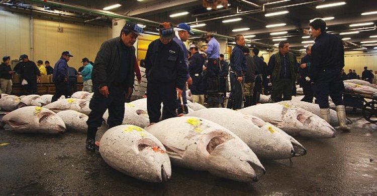 سوق تسوكيجي