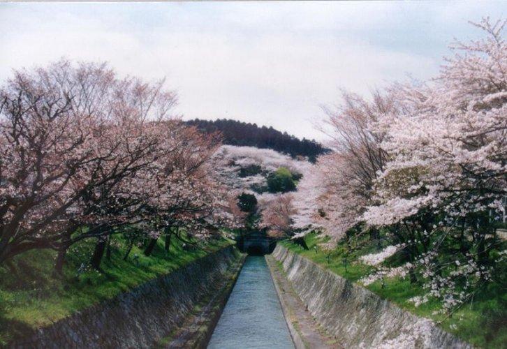 بحيرة بيوا في اليابان