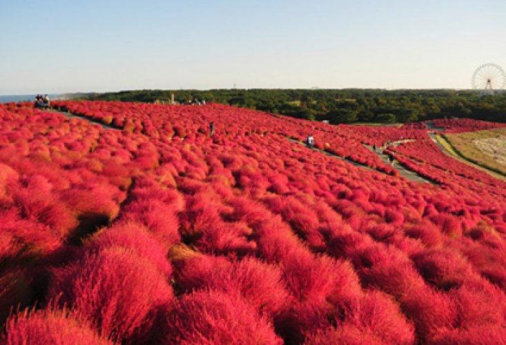 حديقة هيتاشي