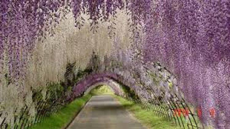 حديقة الزهور أشيكاغا في اليابان