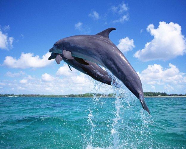 الدلافين الجميلة في جزيرة سقطري