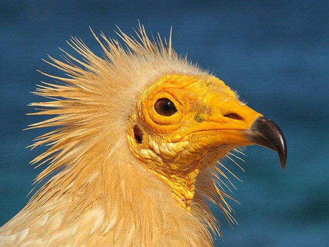 العصافير النادرة في جزيرة سقطري