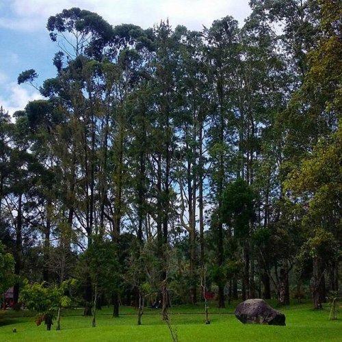 حديقة تشيبوداس العامة في اندونيسيا