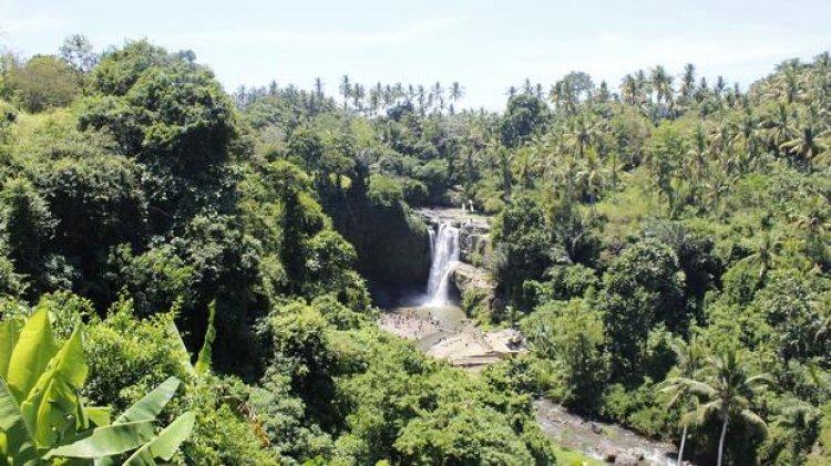 الأشجار والغابات الكثيفة وسط شلال تيجينونجان