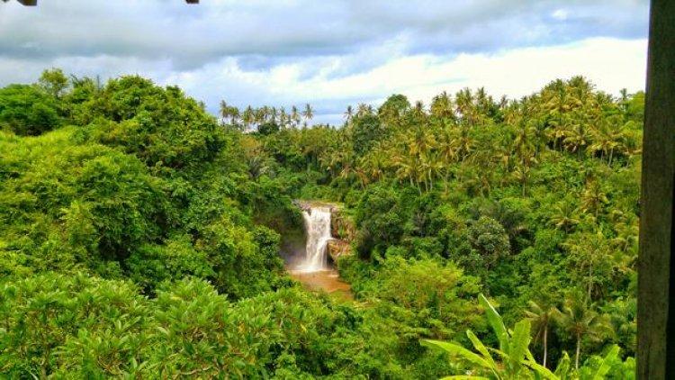 تدفق المياه وسط الاشجار والغابات في مشهد ساحر لشلال تيجينونجان