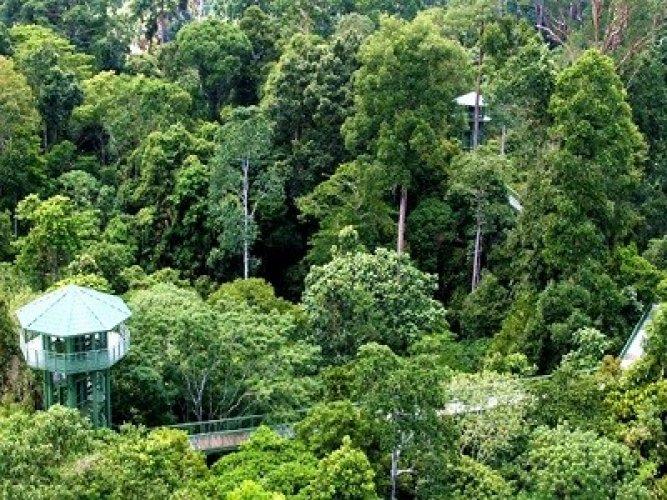 غابات ولاية صباح في بورنيو