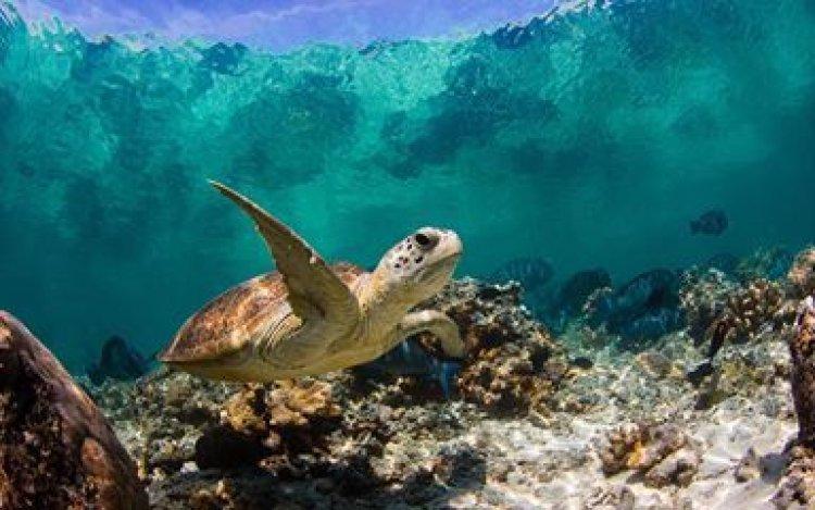 جزر السلاحف في بورنيو