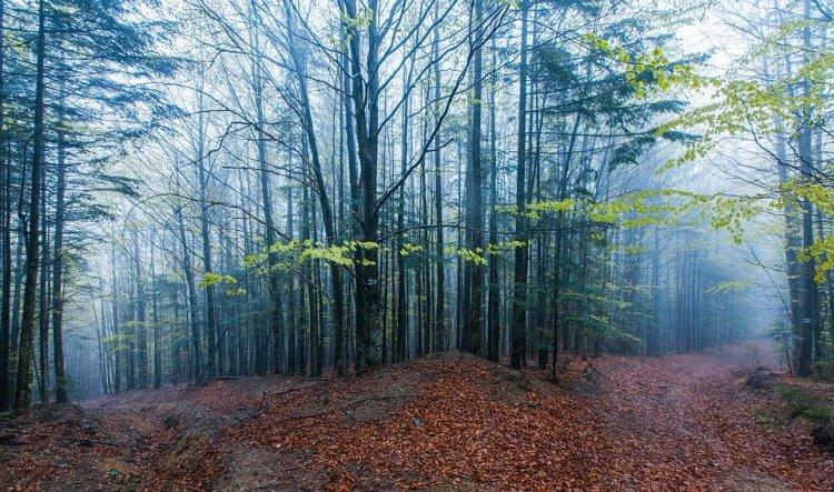 الطبيعة البكر والأشجار في اوكرانيا