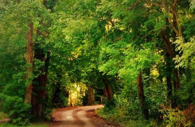 حديقة كيلارني الوطنية مزيج رائع بين الطبيعة والاشجار النادرة