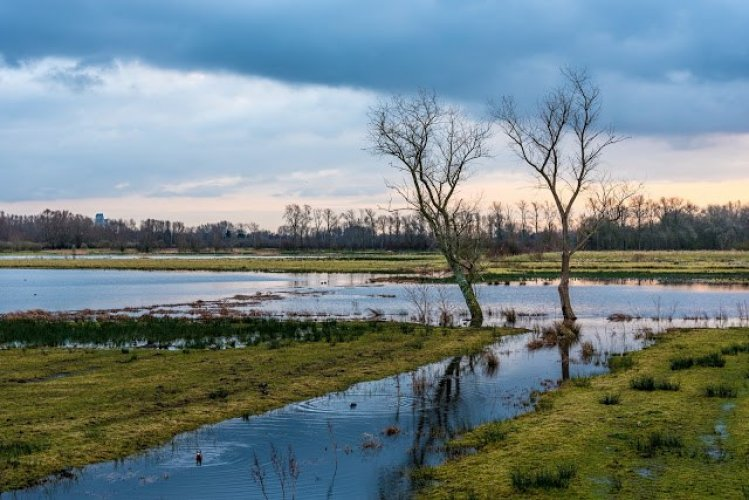 محمية Bourgoyen-Ossemeersen الطبيعية