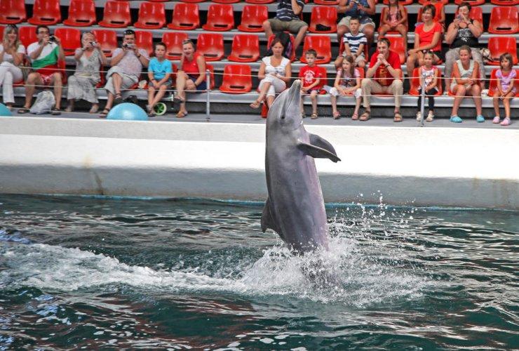 عروض الدلافين في مجمع دولفيناريوم