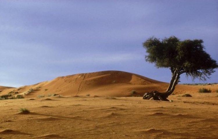 الكثبان الرملية الحمراء في محمية وسط كالاهاري