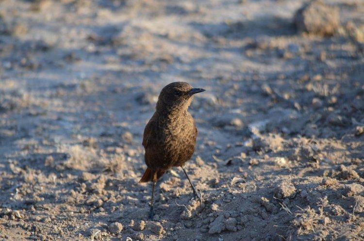 الطيور النادرة في محمية وسط كالاهاري