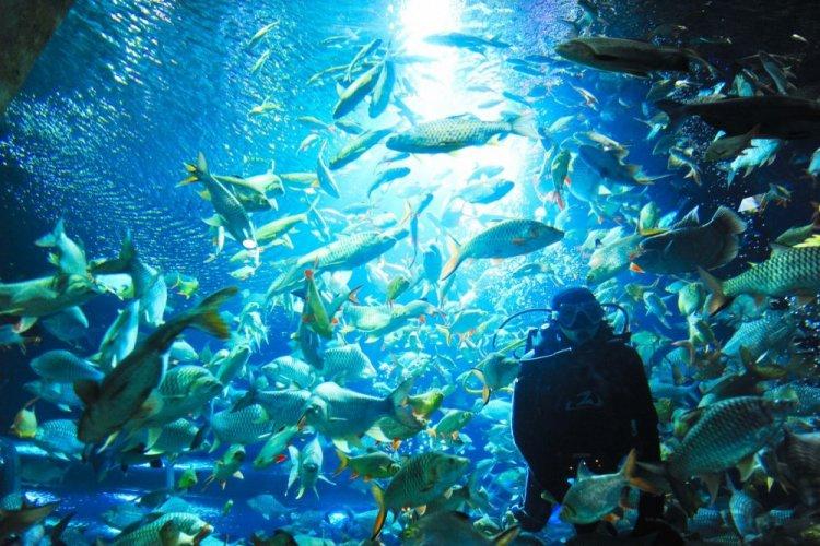أكواريوم حديقة حيوانات شنغماوي