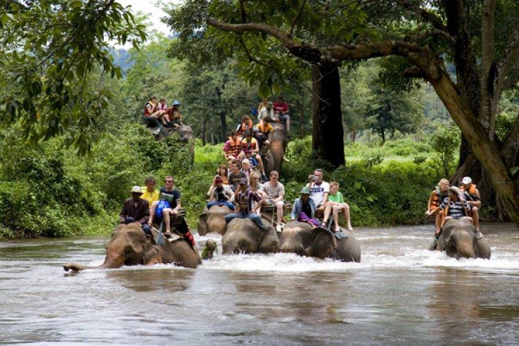 ركوب الفيلة في تايلاند
