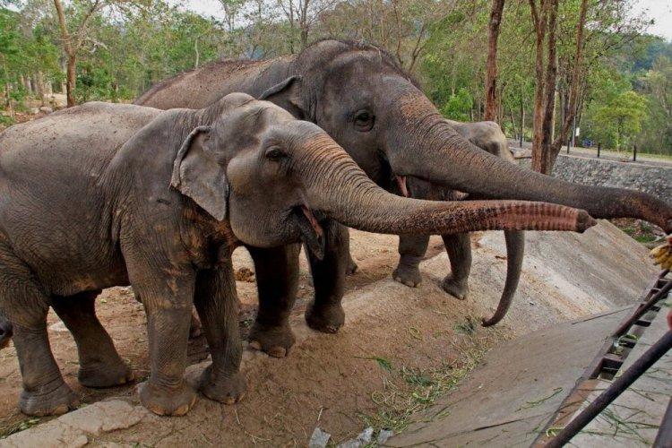 افيال بداخل حديقة حيوانات دوسيت