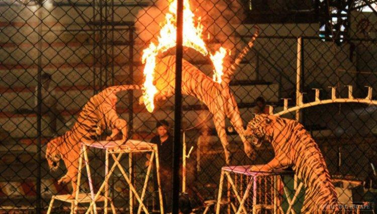 حديقة النمور