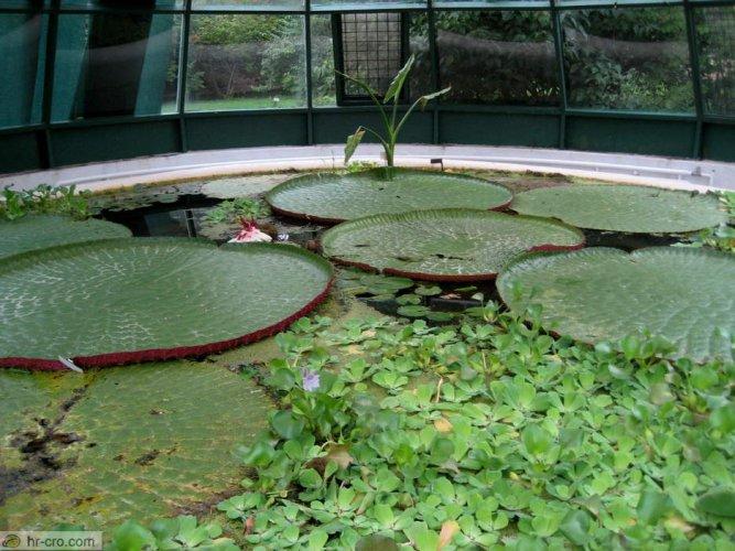 نباتات مائية في حديقة زغرب النباتية