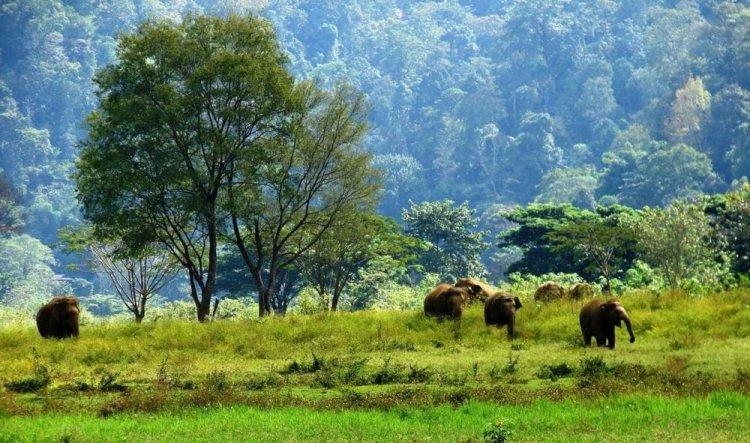 الحياة البرية داخل المنتزة