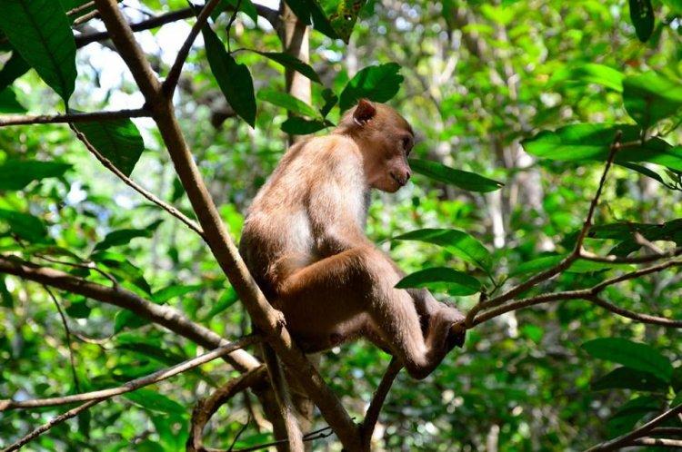 الماكاك في حدائق تايلاند الوطنية