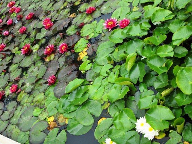 نباتات حديقة زغرب النباتية