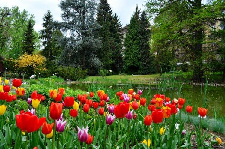 بعض زهور حديقة زغرب النباتية