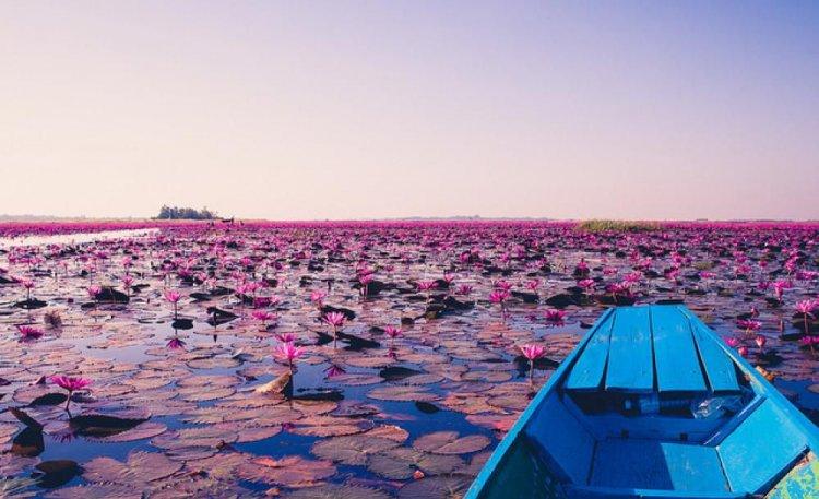 رحلة بالقارب في بحيرة اللوتس الاحمر