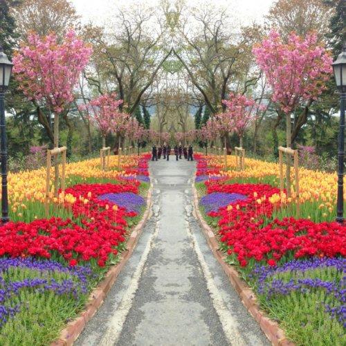 زهور حديقة اميرجان في تركيا