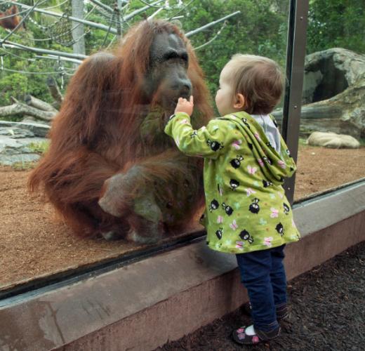 حديقة حيوانات بورصة.