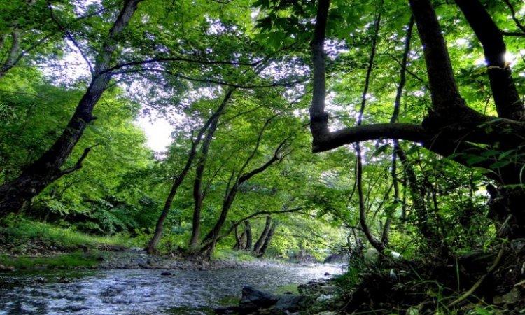 غابة كوجالي تركيا