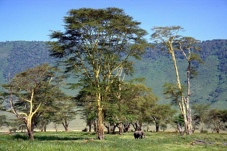 محمية نجورونجورو أحد مواقع التراث العالمي