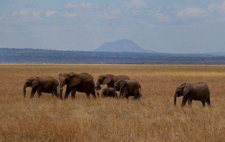 منتزه تارانجيري حديقة وطنية فيها أعلى كثافة للفيلة في تنزانيا