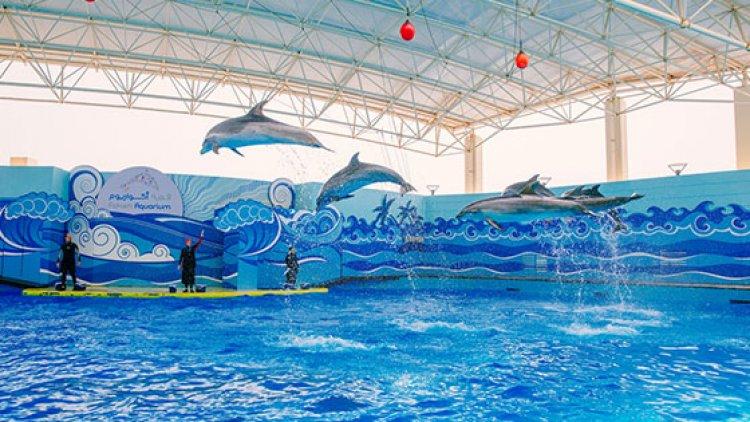 عرض الدلافين في فقيه اكواريوم