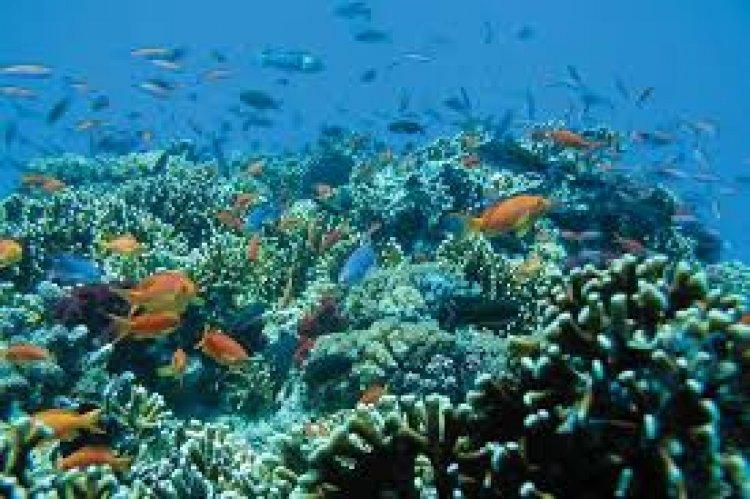 المناظر الساحرة للشعب المرجانية في جزيرة فيجي
