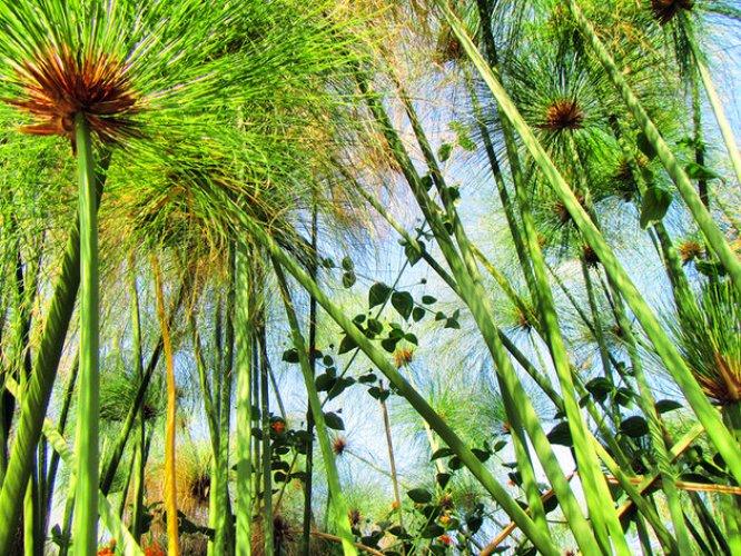 حدائق ديربان النباتية في ديربان