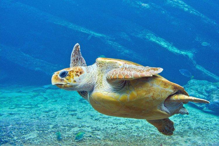 عالم يوشاكا المائي في ديربان