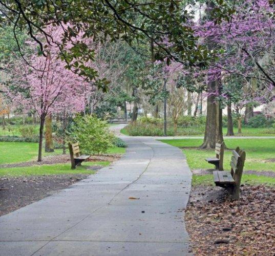 مسارات المشي في الحديقة في حديقة فورسيث