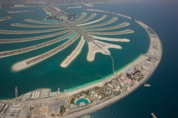 نخلة الجميرة في دبي