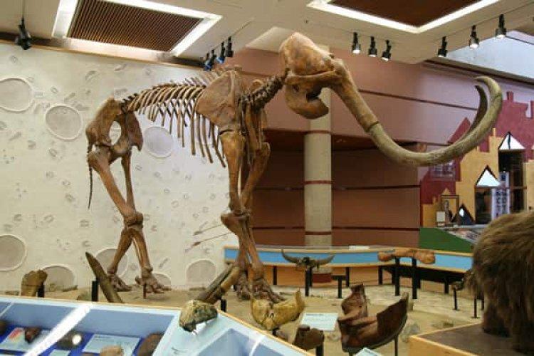 متحف الدولة التاريخي في موسكو حيث يوجد مجموعة نادرة كبيرة من القطع الأثرية والأحافير وأيضًا الهياكل العظمية تعود لآلاف السنين قبل التاريخ الروسي