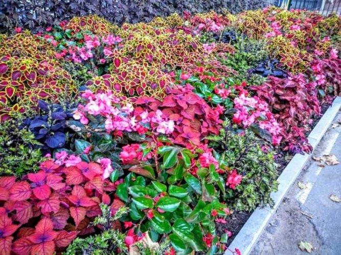 الازهار في حديقة نيسكوشني