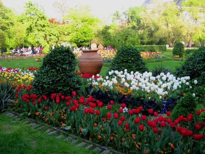 النباتات في حديقة تشميجيو